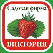 """Садовая фирма """"Виктория"""" группа в Моем Мире."""
